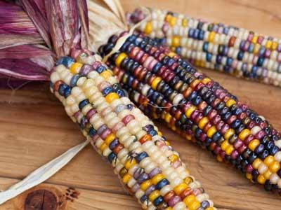 pod-corn