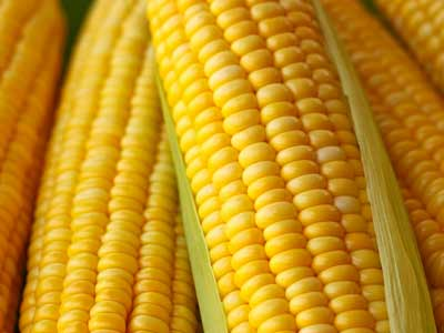 sweet-yellow-corn